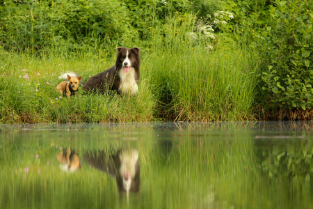 A picture of two dog friends sitting by the water and looking away. They look quite happy together.