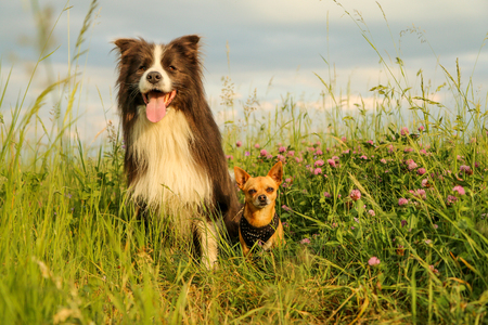 A picture of two dog friends sitting in the grass and flowers and looking away. They look quite happy together.