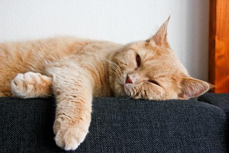 Eine süße Tabby-Katze, noch ein Kätzchen, liegt entspannt auf dem Sofa und sieht sehr müde aus. Er will schlafen.