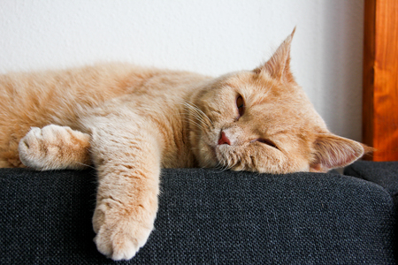 Un lindo gato atigrado, todavía un gatito, está acostado en el sofá en una posición relajada y luciendo muy cansado. Quiere dormir.