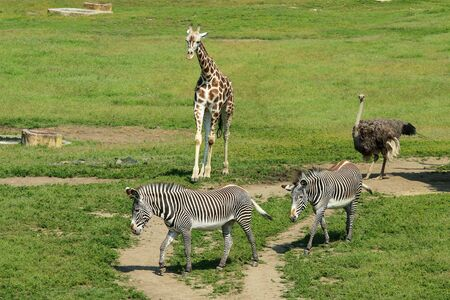 The mixture of African animals on the pasture in the zoological garden.