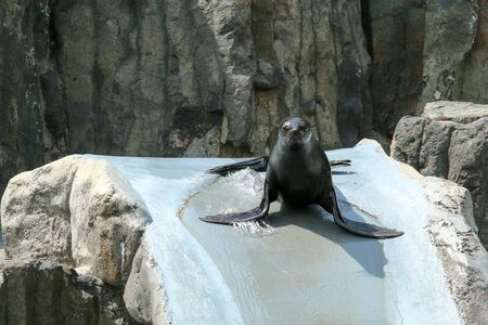 The sea lion is sliding on the water slide in the zoological garden.