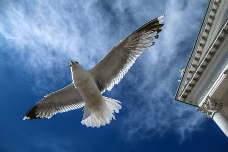The seagulls flying on a clear sky above the roofs and heads of people in Helsinki. They are curious and impudent . But also beautiful.