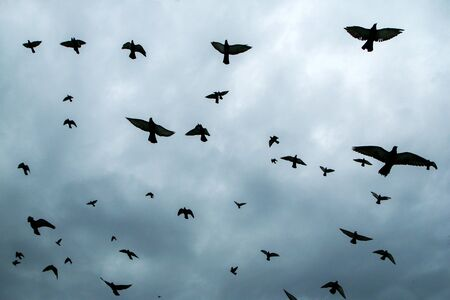 A lot of pigeons flying above the people and roofs of the houses in Milan in Italy during the gloomy rainy day.