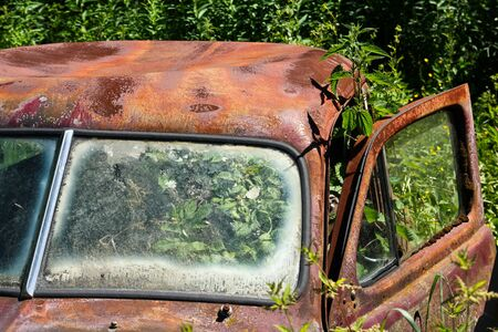 Cars turned into wrecks deep in swedish forests. The nature is slowly taking control. 写真素材