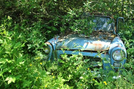 Cars turned into wrecks deep in swedish forests. The nature is slowly taking control.