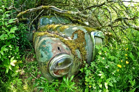Cars turned into wrecks deep in swedish forests. The nature is slowly taking control. Stock Photo