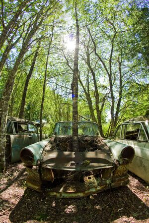 Vintage feeling picture of cars turned into wrecks deep in swedish forests. The nature is slowly taking control. Stock Photo