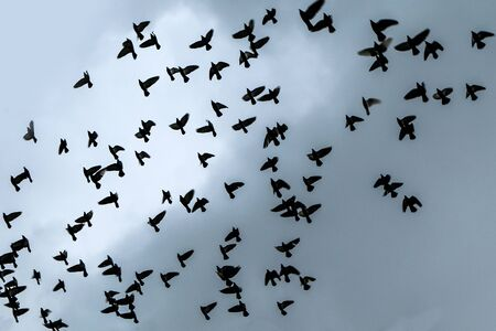 A flock of pigeons is flying high under the rainy dark sky.