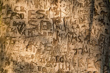 A detail picture of the carvings in a wooden bark. People are writing messages or names. Reklamní fotografie