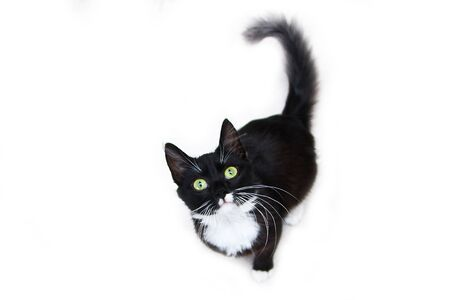The cute black cat with green eyes sitting on a white background, looking up curiously. Looking cute and happy.