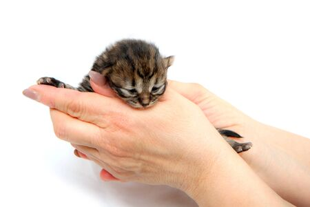 The cute small newborn kitten held in hands as a symbol of care for new life. Isolated on white background. Standard-Bild