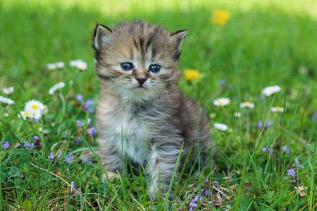 The portrait of a young three weeks old kitten in the grass and flowers. Looking cute and happy even with a bit squinting eyes.