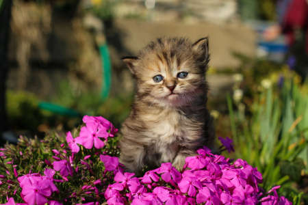 The portrait of a young three weeks old kitten in the grass and flowers. Looking cute and happy even with a bit squinting eyes. Foto de archivo