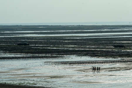 The picture from the oyster farm in Normandy in France at Gouville-sur-Mer during the low tide.