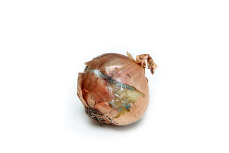 The picture of a mouldy onion because of the wrong storage in hdpe sack. Rotten and uneatable. Isolated on white background.