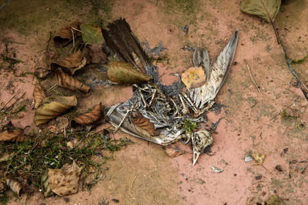 The dead bird is lying on the floor. Only the skeleton remains. 免版税图像