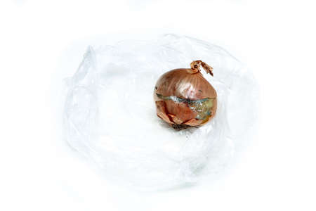 The picture of a molded onion because of the wrong storage in hdpe sack. Rotten and uneatable. Isolated on white background.