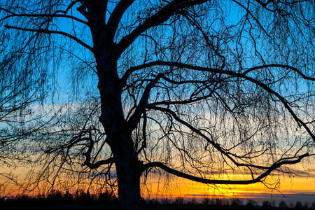 The detail of the bare branches of the tree during the winter. Pictured against the colorful sunset. 免版税图像