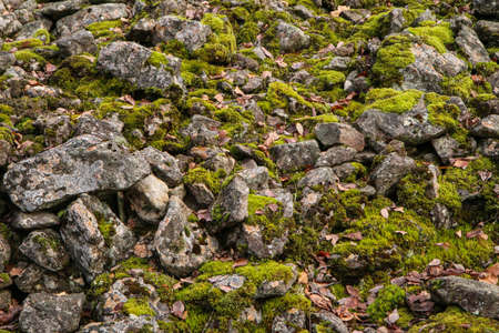 The old wall from the past times. Detail of the rocks covered by moss.
