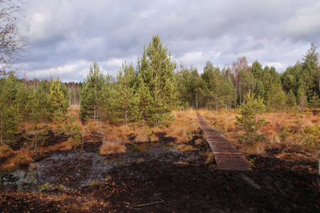 The peat bog in Czech Republic during the late autumn.