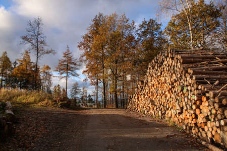 The road in the wood with a big pile of stacked wood at the side of it. Pictured during late autumn.
