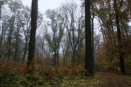 The wood during the late autumn with clear branches during the misty morning.