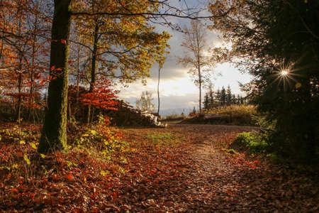 Nice and colorful czech nature during the autumn. Red and yellow woods during the bright sunny day.