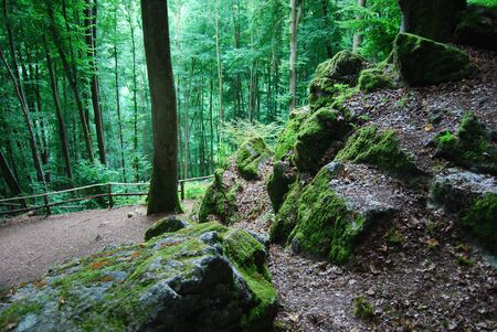 bewitched: Man in the Moss in a bewitched German Forest