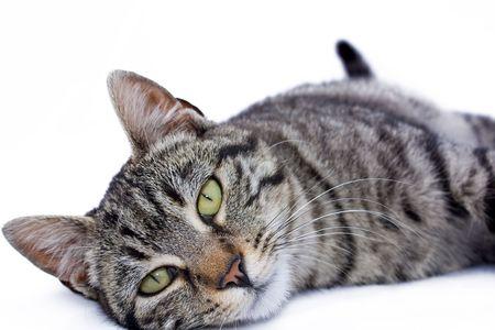 Pets photo