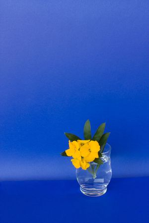 Isolated Objects - Glass with flowers isolated on blue background. photo