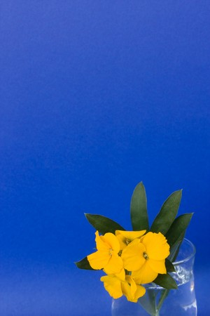 Cards - Blue card with yellow aegean flower in the right bottom corner. photo