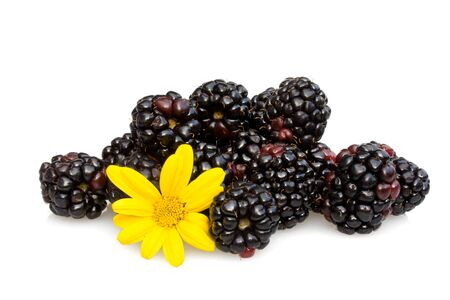 Food & Drinks - Fruits - Blackberries decorated with yellow capedaisy,  isolated on white background. photo
