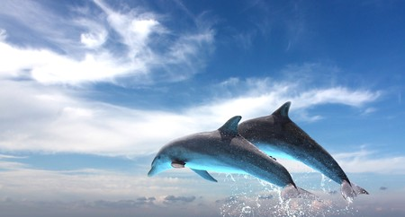 dolphin: Ocean Life - Couple of dolphins jumping against the blue sky. Stock Photo