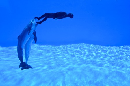 mondial: New Mondial Record In Freediving Established By Simone Arrigoni at Zoomarine Park, Torvaianica, Italy on 27.05.2010 - Simone Arrigoni, multiple prizewinner in freediving, pushed by the dolphins Paco and King setting a new world record on 27.05.2010