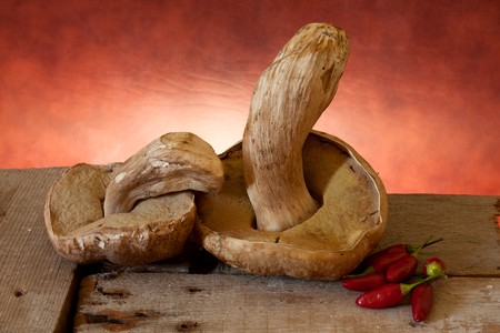 Penny Buns (Boletus Edulis) and red hot chili peppers prepared for drying. Stock Photo - 7813808