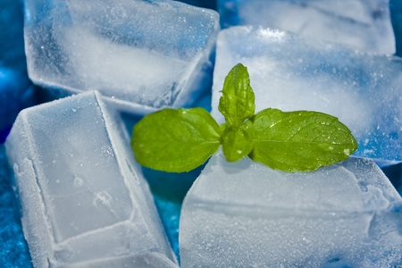 Closeup of ice cubes and mint. photo
