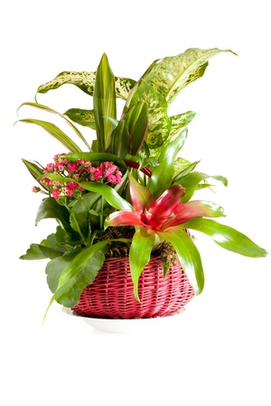 Gardening - Pot with indoor green decorative plants. Stock Photo - 8592204