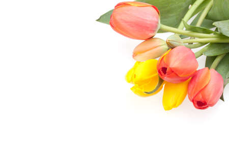 Seasons - Spring - Bunch of red and yellow  tulips isolated on white background. Stock Photo - 9088049