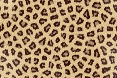 Backgrounds And Textures - Leopard skin texture. Stock Photo