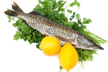 Fresh pike with lemons on parsley bed  photo