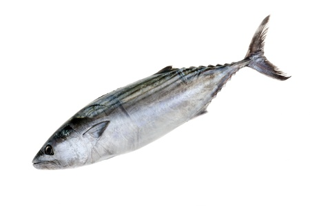 thunnus: Tuna fish isolated on white background. Stock Photo