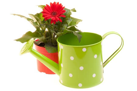 Pot with red Gerbera and watering can isolated on white background. Stock Photo - 12887938