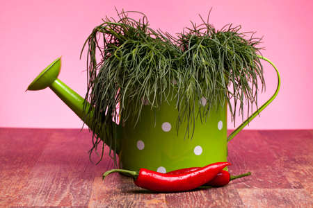 Green watering can with fresh agretti (Salsola soda or Saltwort or Barilla plant) and chili peppers. Stock Photo - 13189735