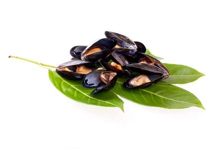 Stewed mussels on privet leaves isolated on white background  photo