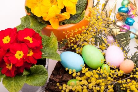 mimose: Zucchero Uova di Pasqua - Uova di Pasqua di zucchero in colori pastello su corteccia nido decorato con mimose e primule