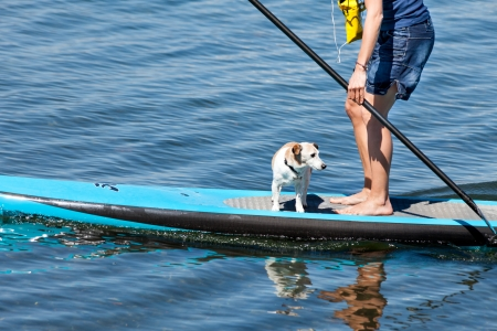 Woman practicing paddle surf with her dog on the surfboard  Stock Photo