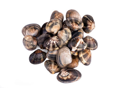 overhead shot: Raw clams on white background - overhead shot.