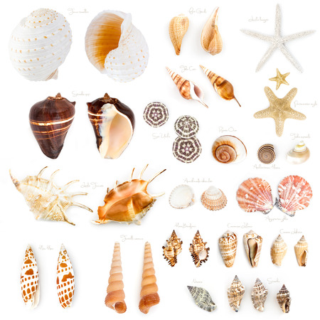 Seashell collection isolated on the white background. Imagens