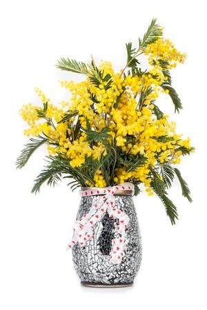 mimose: Vaso con mimose in fiore, isolato su sfondo bianco. Archivio Fotografico